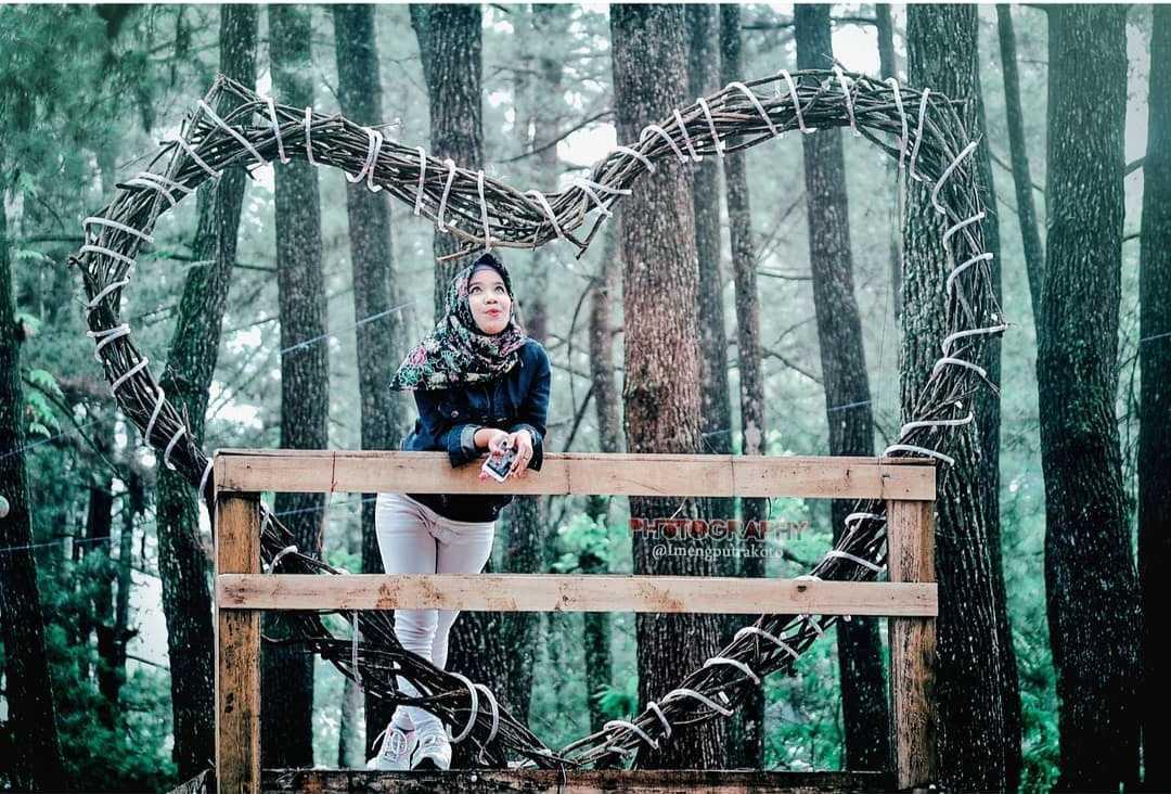 Pinus Ecopark